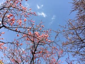 梅の花0209_2